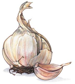 ajo-compra-conservacion-consejos-garlic.jpg