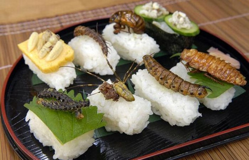 sushi_insectos