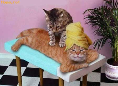 Funny Massage