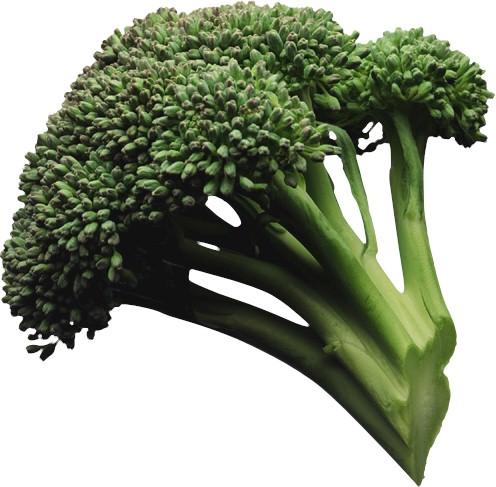 brecol-brecoli-brocoli