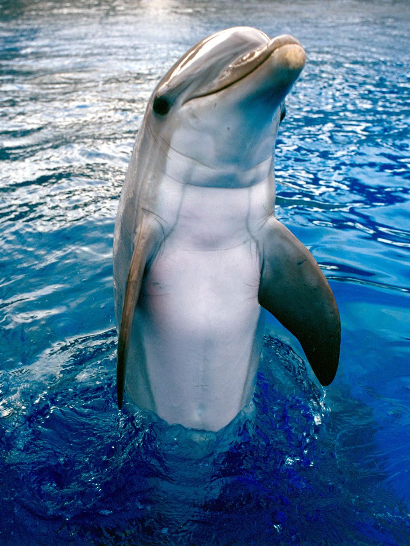 delfines-1