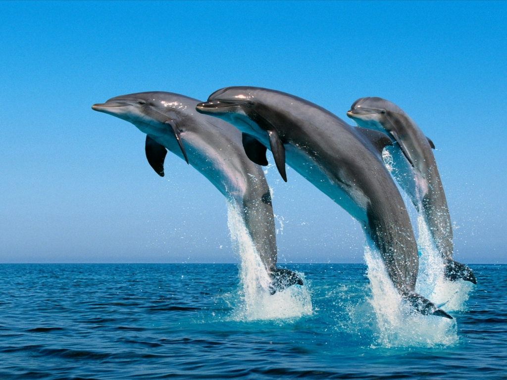 delfines-2