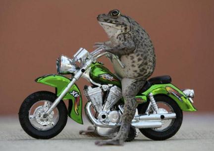 Juego con Frogger