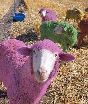 Juego de escape con ovejas