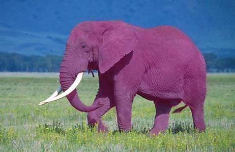elefante volando musico