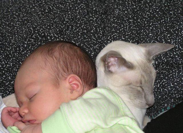 adorables bebes