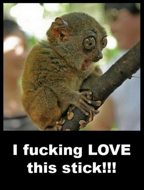 animal-humor
