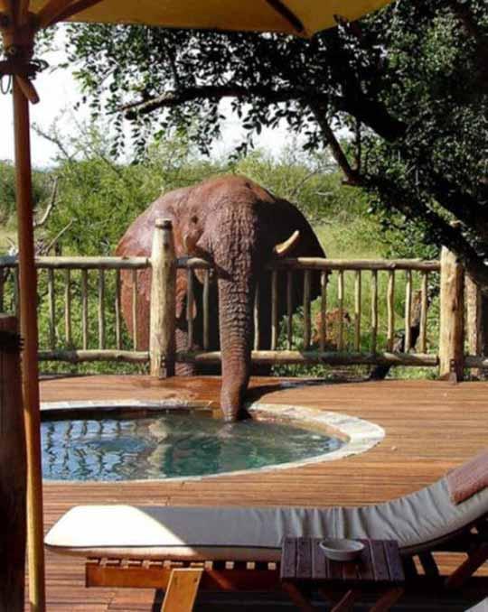elefante-humor