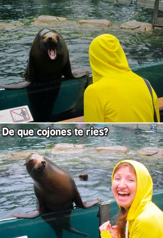 foca enfadada
