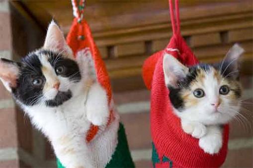 gatos-bonitos-01