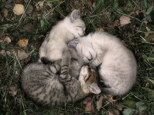 gatos-bonitos-03