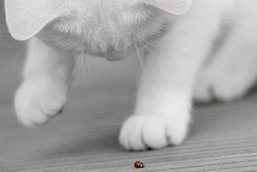 gatos-bonitos-04