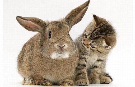 gatos-bonitos-05