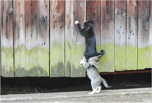 gatos-bonitos-06