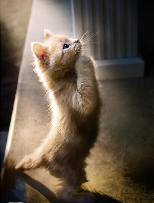 gatos-bonitos-07