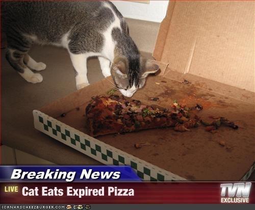 gatos-comiendo-pizzas-