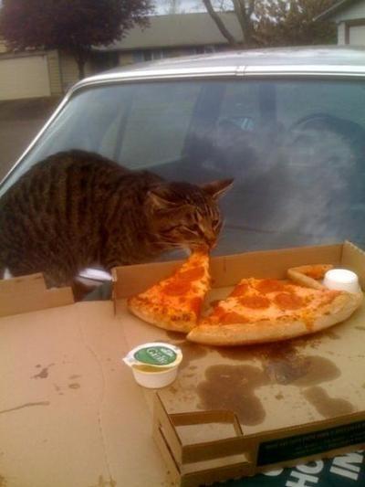 gatos-comiendo-pizzas-01