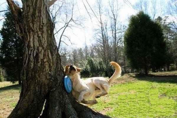 perro tonto 1