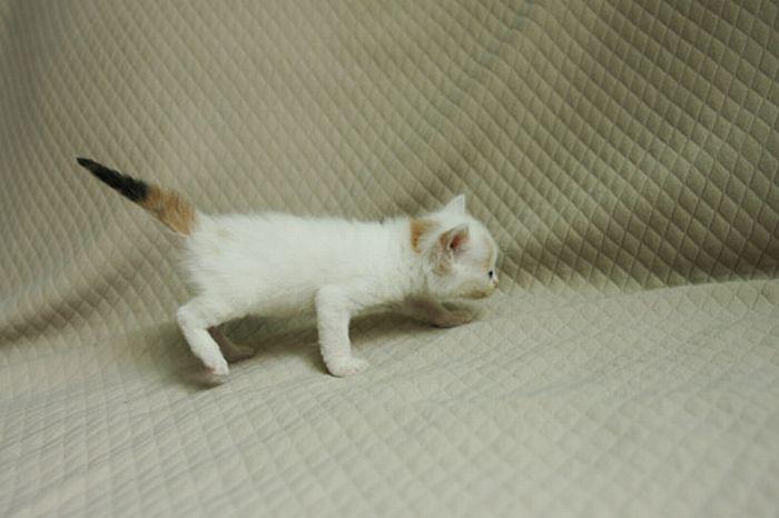 gatito-bajo-lluvia-05