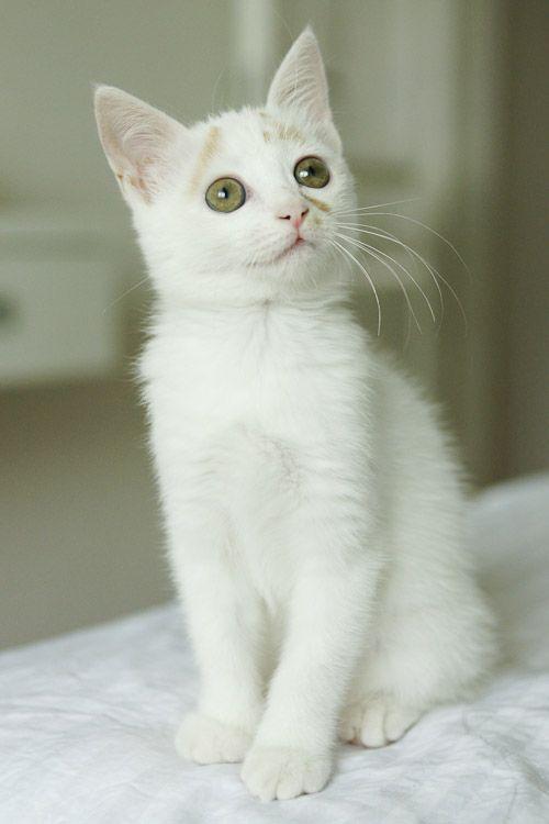 gatito-bajo-lluvia-13