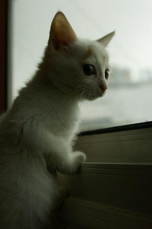 gatito-bajo-lluvia-15
