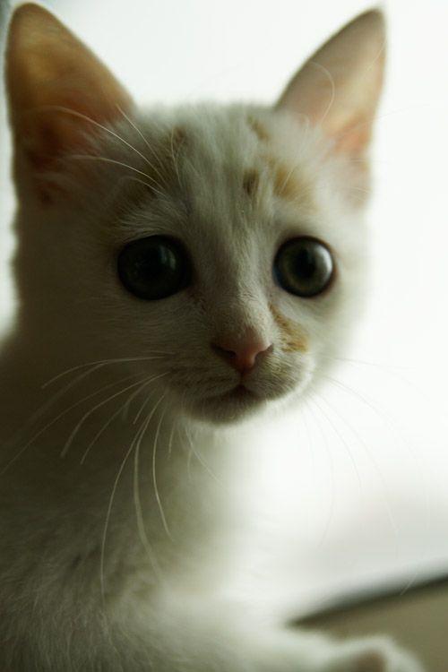 gatito-bajo-lluvia-16