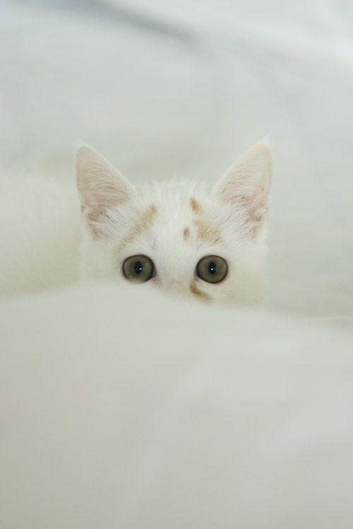 gatito-bajo-lluvia-17
