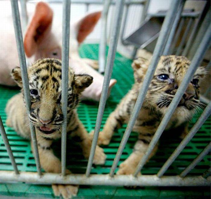 animales-adoptados
