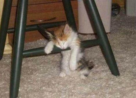 cansados-siesta-humor-15