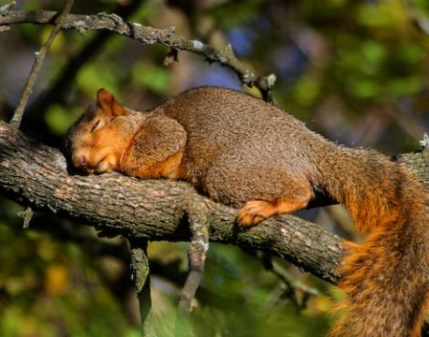 cansados-siesta-humor-19