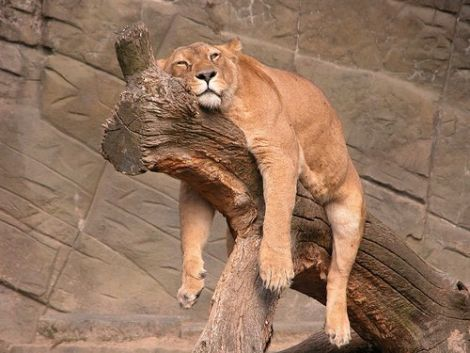cansados-siesta-humor-21