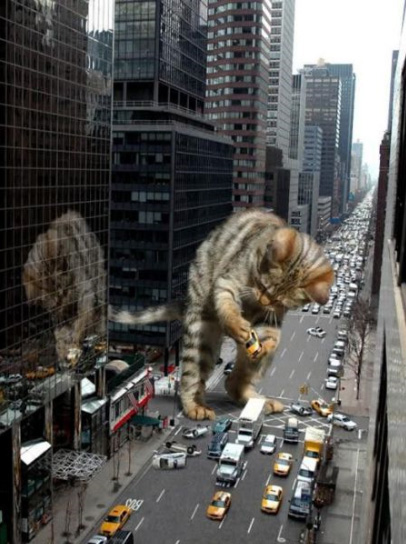 fotos-gato-gigante