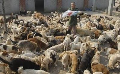 refugio-perros-gatos