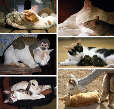 animales amigos