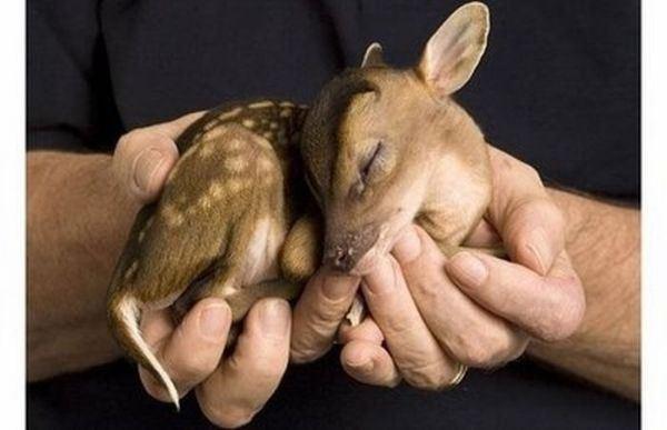 galeria-bebes-animales