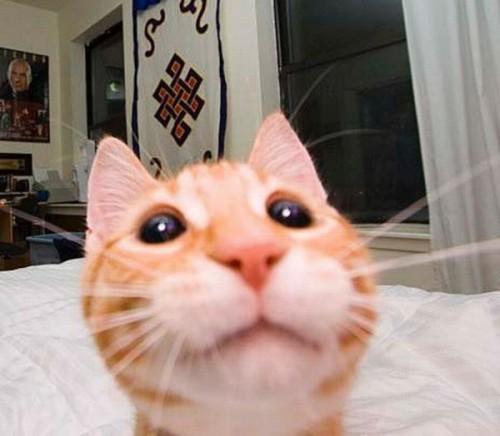 gato fotojenico