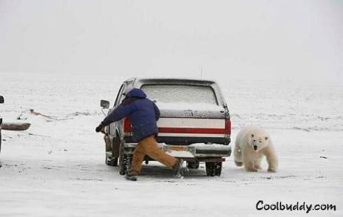 oso enfadado