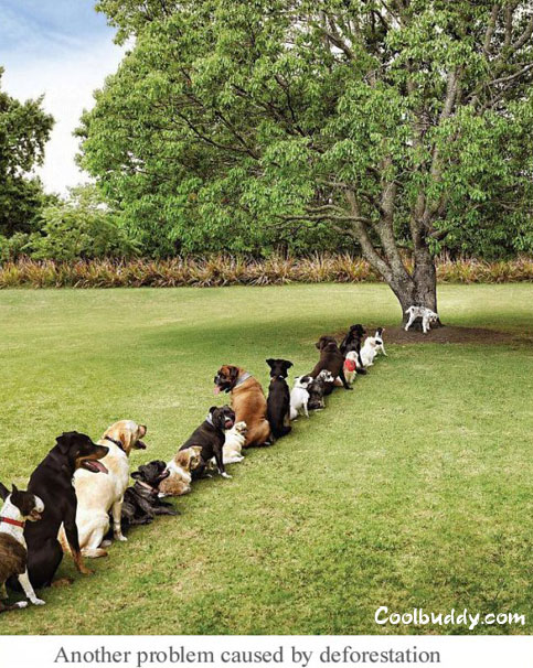perros cola lavavo
