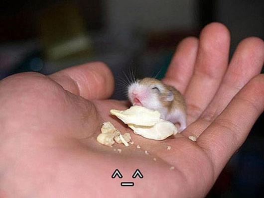 raton humor