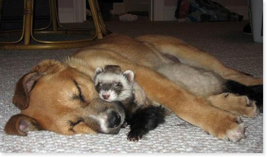 animales-bebes-simpaticos-humor