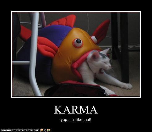 animales-simpaticos-humor
