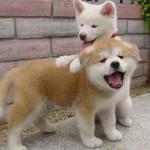 Animales simpáticos y humor