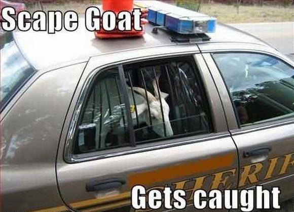 cabra detenida