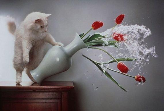 gato torpe