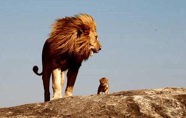padre leon cachorro