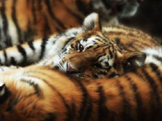 animales-cariñosos