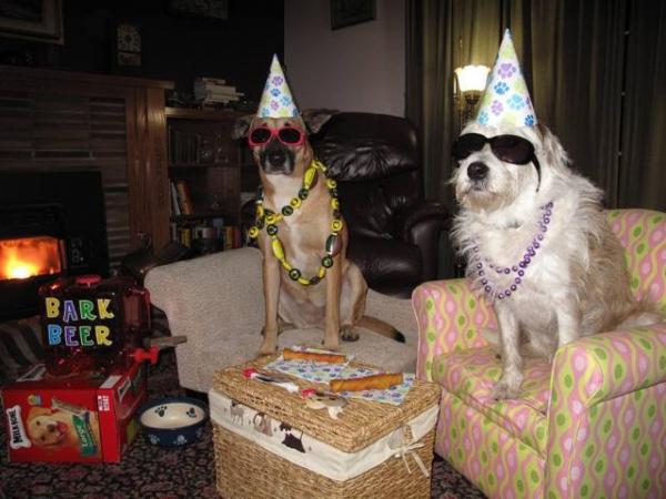 fiesta-perros
