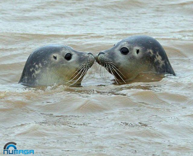 focas-enamoradas