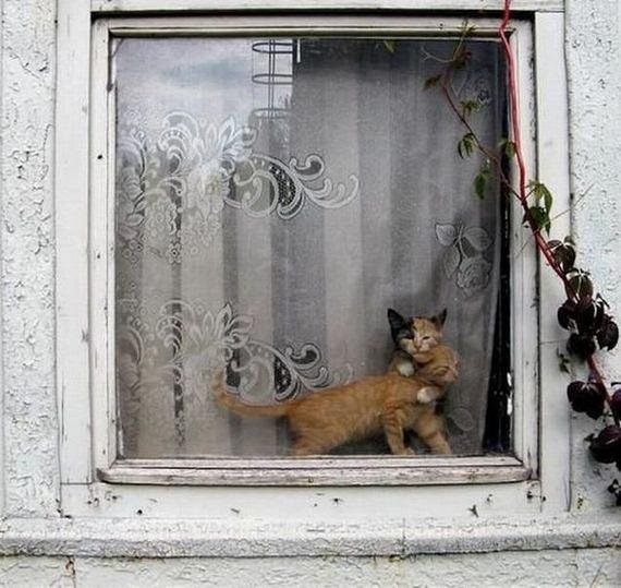 fotos-animales-simpatia