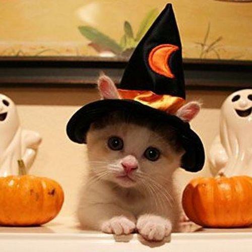 gato-bruja